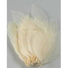 SKELETAL MAGNOLIA LEAVES - OUT OF STOCK