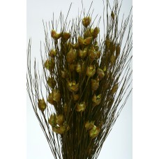 "BELL GRASS SHORT 15""-20"" Natural- CLOSE OUT"