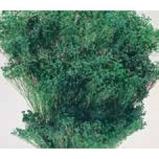 BLOOMS BROOM Emerald (BULK)