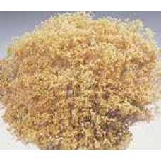BLOOMS BROOM Natural (BULK)