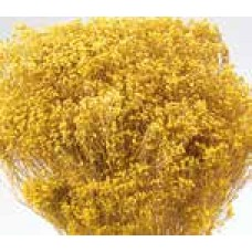 BLOOMS BROOM Yellow
