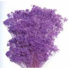 BLOOMS GYPSY Lavender (BULK)- OUT OF STOCK