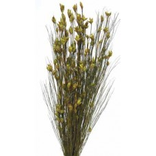 "BELL REED PRESERVED  BASIL 36""-40"""