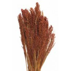 "CANARY GRASS Burnt Oak 24""  -OUT OF STOCK"