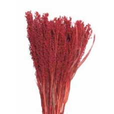 CANARY GRASS Red 24""