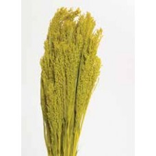 CANARY GRASS Yellow 24""