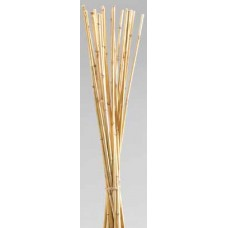 WILD CANE Natural 40""