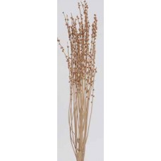"DATEBERRY CLUMPS  Natural 40""-44"""
