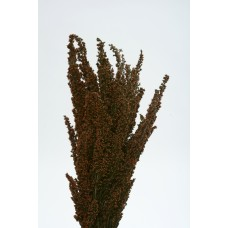 "ERICA DELICIOSA PRESERVED 16"" Brown- OUT OF STOCK"