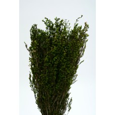 "ERICA DELICIOSA PRESERVED 16"" Green- OUT OF STOCK"