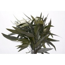 "EUCALYPTUS WILLOW PRESERVED 15"" Green- OUT OF STOCK"