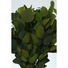 "EUCALYPTUS POPULUS PRESERVED 15"" Green- OUT OF STOCK"
