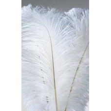 "FEATHERS OSTRICH WING White 10""-13"" (BULK)"