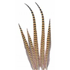 "FEATHERS RINGNECK PHEASANT Natural 18""-20"""
