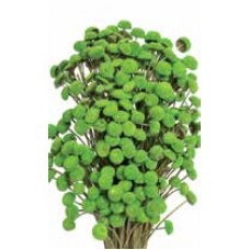 "FLORAL BUTTONS Basil 18"" (BULK)- OUT OF STOCK"