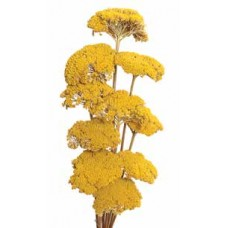 "YARROW Natural 22""  (BULK)- OUT OF STOCK"