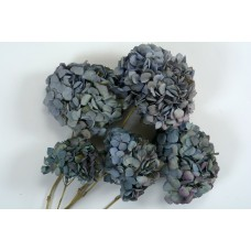"HYDRANGEA MACROPHYLLA 10"" Blue- OUT OF STOCK"