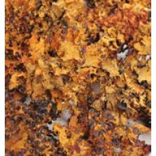 MOSS BLACK LICHEN Autumn (HEADER)- OUT OF STOCK