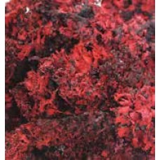 MOSS BLACK LICHEN Red (BULK)
