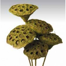 "LOTUS PODS Moss Coat 16""- OUT OF STOCK"