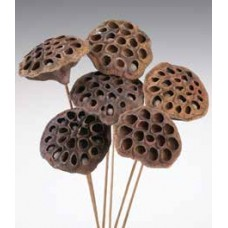 LOTUS PODS Natural 16""