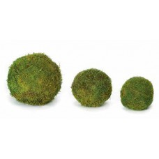 SHEET MOSS BALL PRESERVED 4""