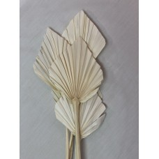 """PALM SPEAR SMALL 4-5"""" -OUT OF STOCK"""