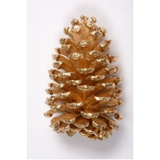 "SLASH PINE CONE 4""-6"" GOLD"