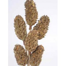 "MAGNOLIA PODS Natural 16""- OUT OF STOCK"