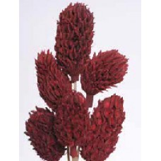 "MAGNOLIA PODS Red 16""- OUT OF STOCK"