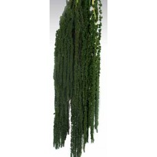 AMARANTHUS HANGING PRESERVED Dark Green
