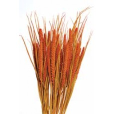 "SPRAY MILLET 28"" Autumn-OUT OF STOCK"