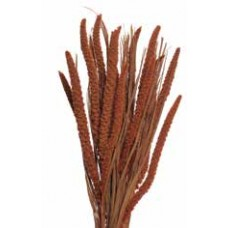 "SPRAY MILLET 28"" Burnt Oak- OUT OF STOCK"