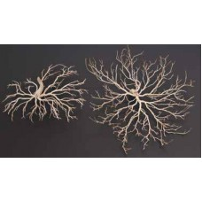 "BONSAI WOOD MINI 5""-7"""